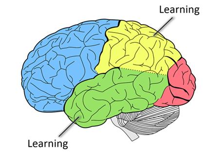Cognitian - Learning - UX Design for Seniors